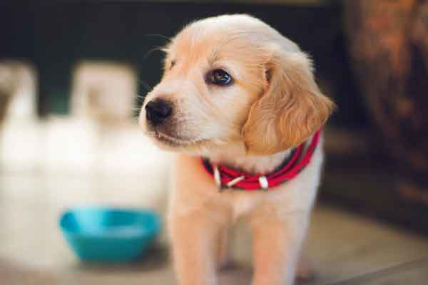 aide au choix d'un chien en Dordogne