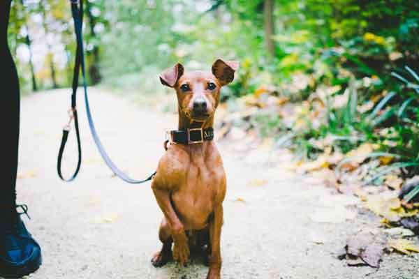 éducation canine autour de brive