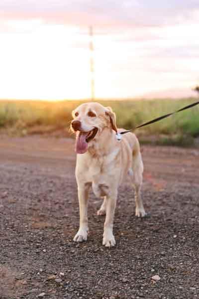 démarches comportementaliste educateur canin proche cahors
