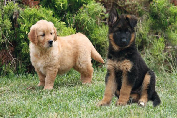 mon histoire de comportementaliste educateur canin