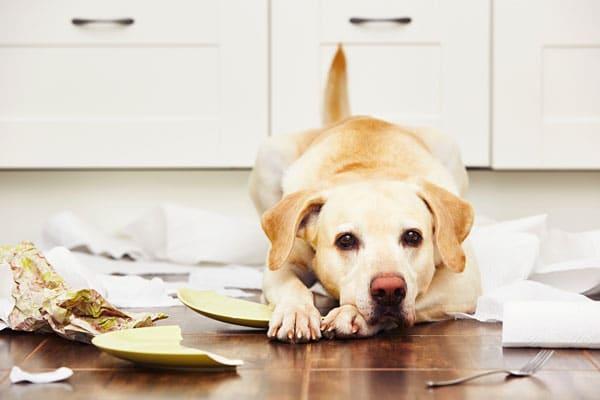 educateur canin et comportementaliste Périgord